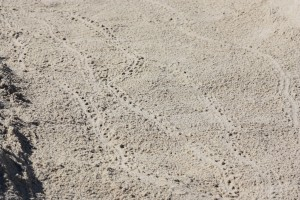Tiny Turtle Tracks